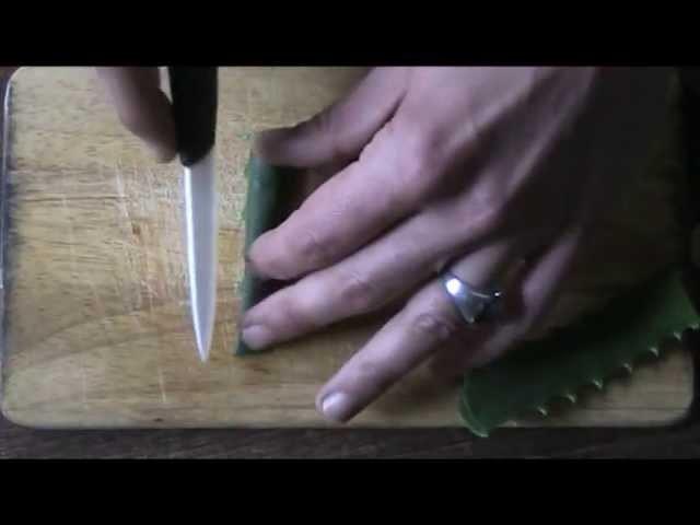 Aloe Arborescens: estrazione-separazione meccanica del Gel puro.