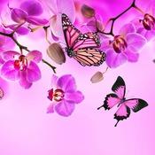 Laura Butterfly Crea